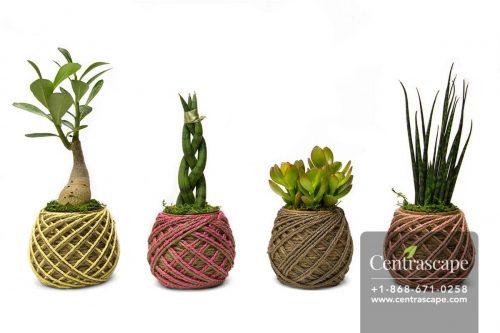 Centrascape---Pots---Yarn-of-Life 1