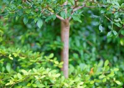 Centrascape - Trees - Black Olive 3