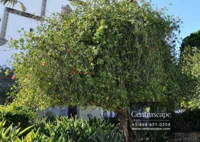 Centrascape - Trees - Bottle brush 2