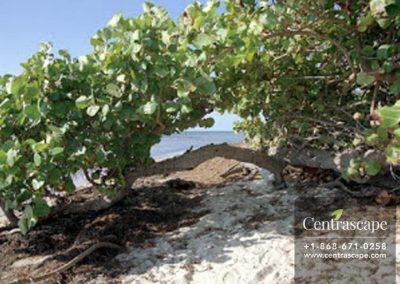 Centrascape - Trees - sea grape tree 2