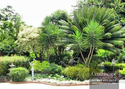 asian garden 2
