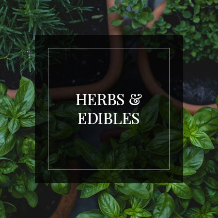 Centrascape - Edible & Herbs Garden