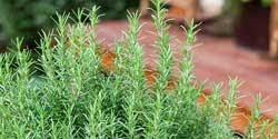 Centrascape - Edibles & Herbs