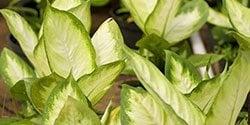 Centrascape Houseplants