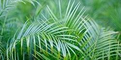 menu-plants-palms