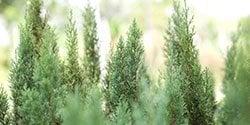 menu-plants-trees