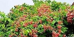 Centrascape Vines