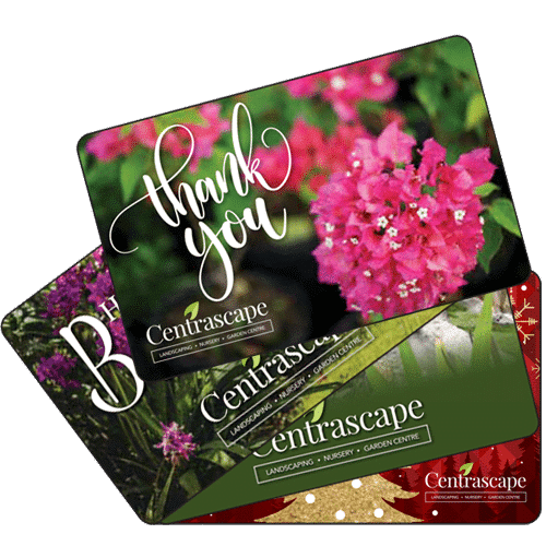 Centrascape Gift Cards